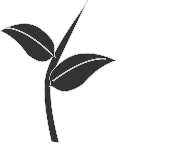 leaves plant stem silhouette black dark grey branch leafy buds shoots growth flora nature sprout foliage pattern design decorative tattoo natural sprout sprout sprout sprout sprout