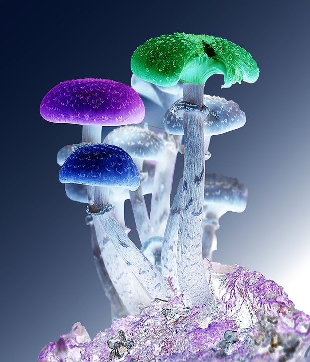 photoshop, mushrooms, psychedelic