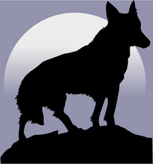 wolf silhouette moon howl howling light wildlife tattoo werewolf forest moonlight hunter wolf wolf wolf wolf wolf silhouette